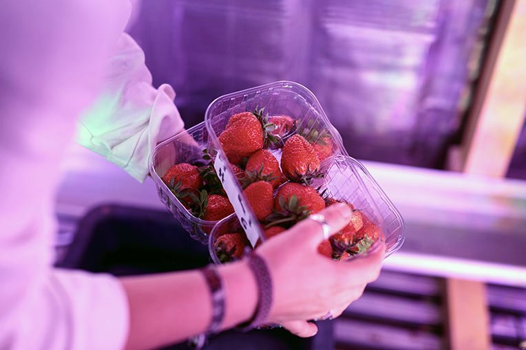 fraises containers agricool